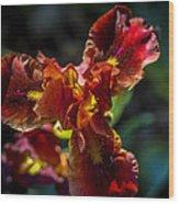 Fiery Iris Wood Print