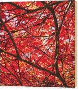 Fiery Maple Veins Wood Print