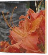 Fiery Orange Azalea  Wood Print