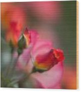Fiery Roses Wood Print