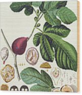 Fig Engraved By Johann Jakob Haid  Wood Print