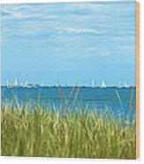 Figawi Sailboat Race Wood Print by Diane Diederich