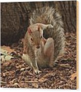 Fighter Squirrel Wood Print
