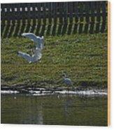 Fighting Birds Wood Print