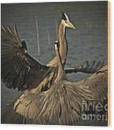 Fighting Great Blue Herons Wood Print