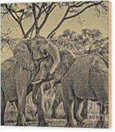 fighting male African elephants Wood Print