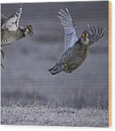 Fighting Prairie Chickens Wood Print