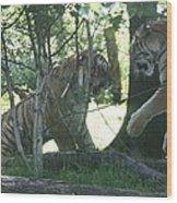 Fighting Siberian Tigers Wood Print