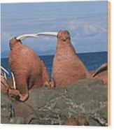 Fighting Walrus Wood Print