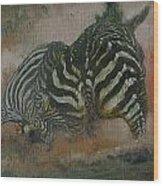 Fighting Zebras Wood Print