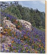 Figueroa Mountain Splendor Wood Print