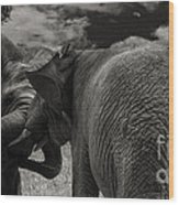 Fiighting Elephants Wood Print