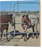 Fillies At The Gate Wood Print