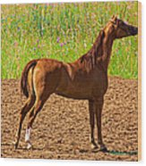 Filly Wood Print