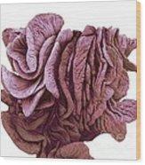 Fimbriae Of A Fallopian Tube, Sem Wood Print