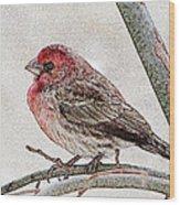 Finch Art Wood Print