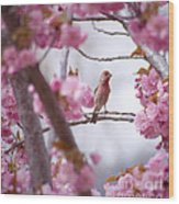 Finch Frame Wood Print