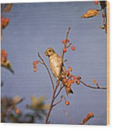 Finch In A Cherry Tree Wood Print