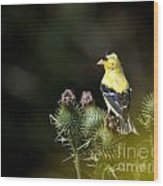 Finch In The Thistles Wood Print