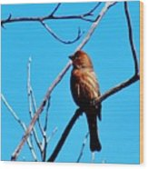 Finch On Branch 031015a Wood Print