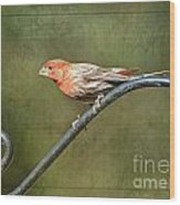 Finch On Guard I Wood Print