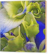 Find Ant Hydrangea Wood Print