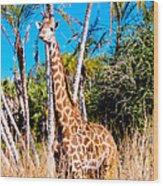 Find The Giraffe Wood Print