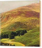 Find The Soul. Golden Hills Of Wicklow. Ireland Wood Print