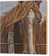 Fine Filly Wood Print by Mamie Thornbrue