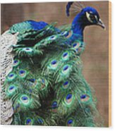 Finely Feathered Wood Print