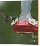 Fiona The Little Female Hummingbird Wood Print