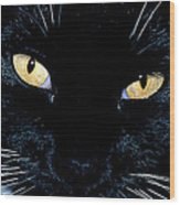 Fiona The Tuxedo Cat Wood Print