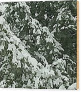 Fir Tree Branch Covered With Snow  Wood Print