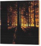 Fir Trees Back Lit  Wood Print