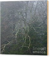 Fire Cherry In Mist Wood Print