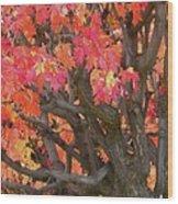 Fire Maple Wood Print