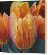 Fire Orange Tulip Flowers Wood Print
