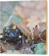 Fire Salamander Dry Leaves Wood Print