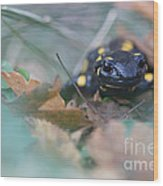Fire Salamander Front View Wood Print