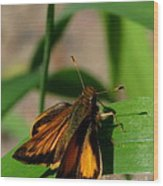 Fire Skipper Wood Print