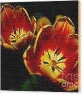 Fire Tulip Flowers Wood Print