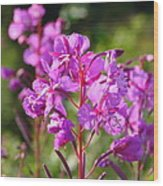 Fire  Weed 3 Wood Print