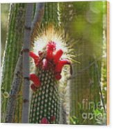 Firecracker Cacti Wood Print