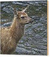 Firehole River Elk Fawn Wood Print