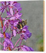 Fireweed Bee Wood Print