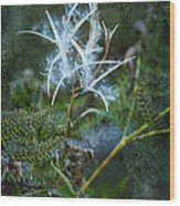 Fireweed Flame Out But Spreading Wood Print