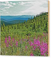 Fireweed Near Top Of The World Highway-alaska Wood Print