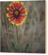 Firewheel Wood Print