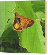 Firey Skipper Butterfly Wood Print