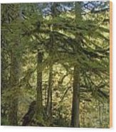 Firs And Ferns Wood Print
